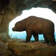 Уральские палеонтологи обнаружили кладбище пещерных медведей в верховьях реки Печора